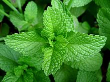 220px-Mint-leaves-2007